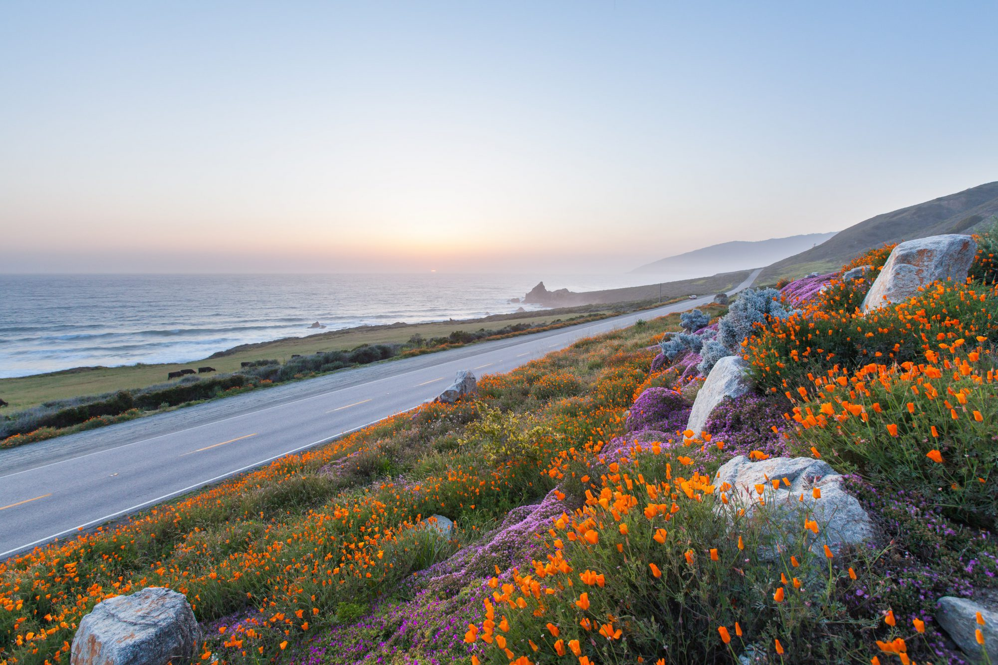 A picture of a beach road with beautiful flowers - Bodega Bay