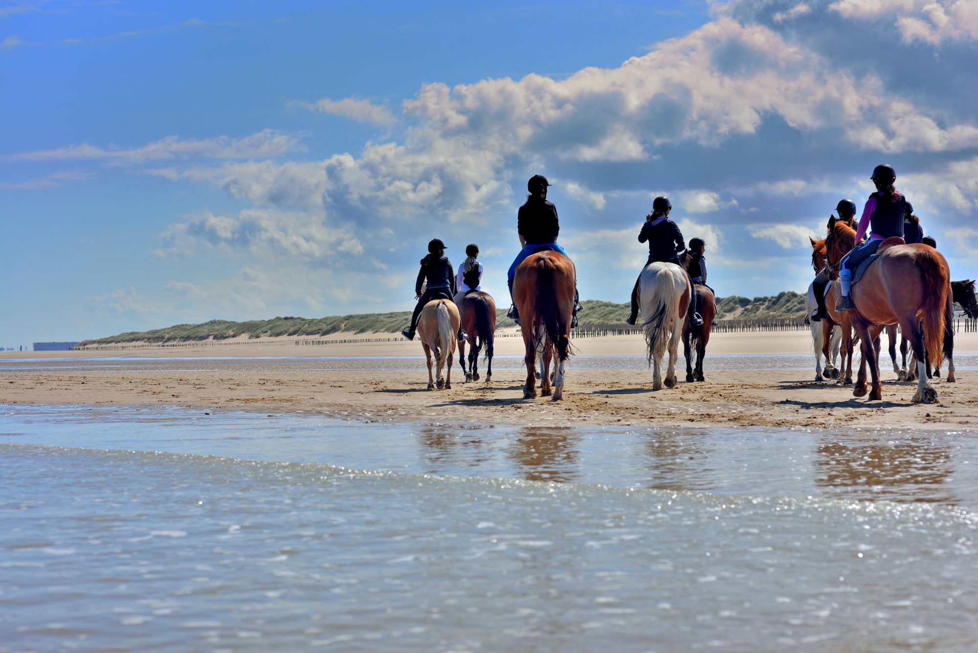Horseback Riding Along The Coast